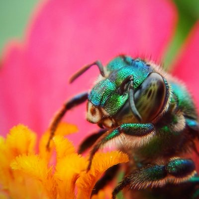What is the Importance of Bees?