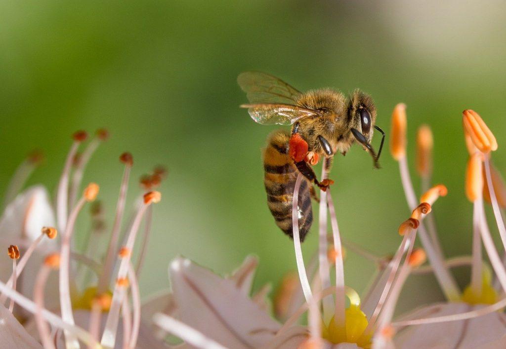 bees in flowers