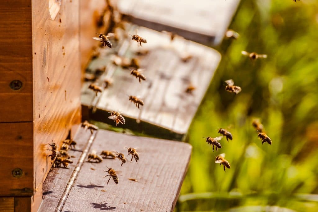 bee in box