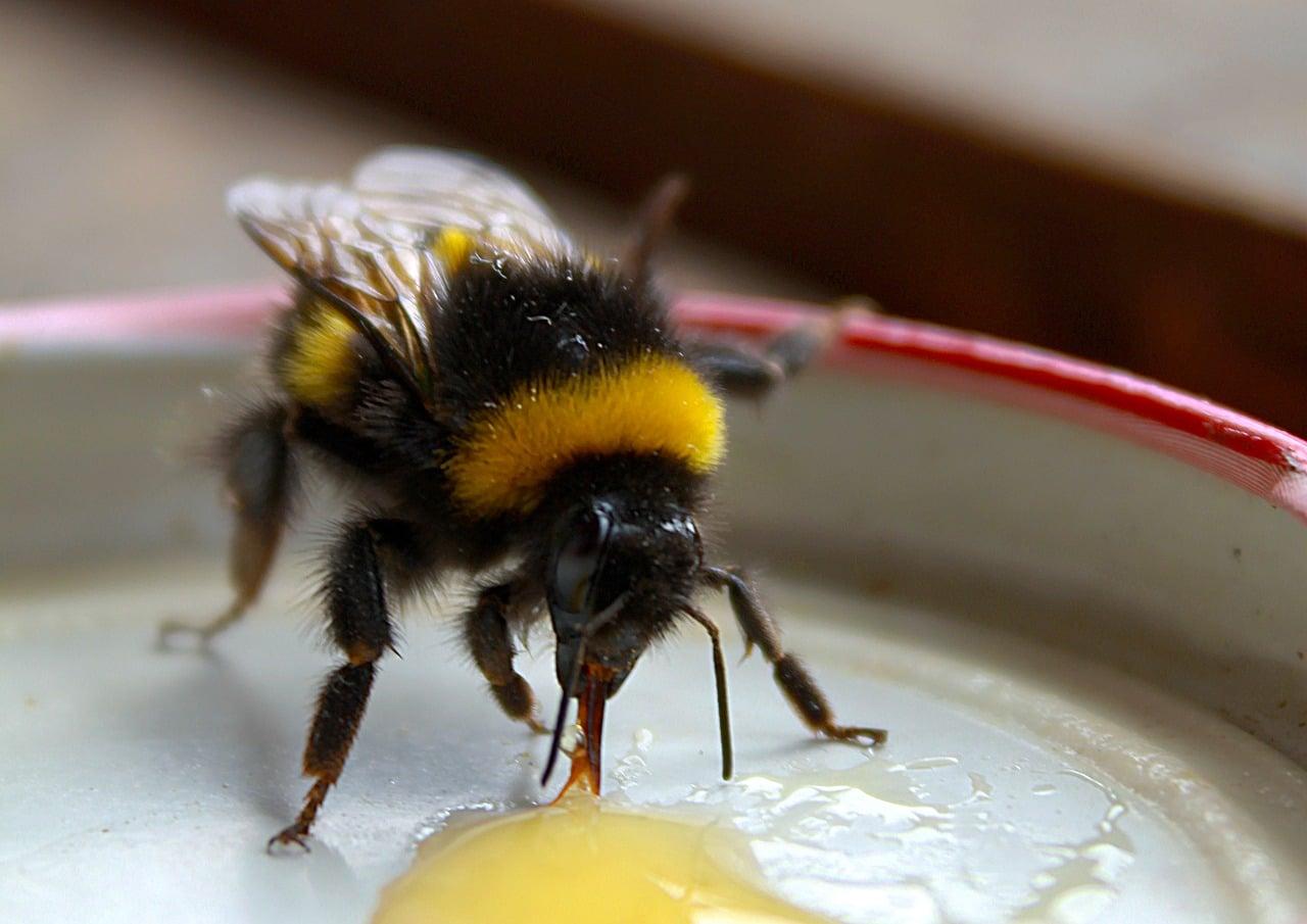 bee sucking honey