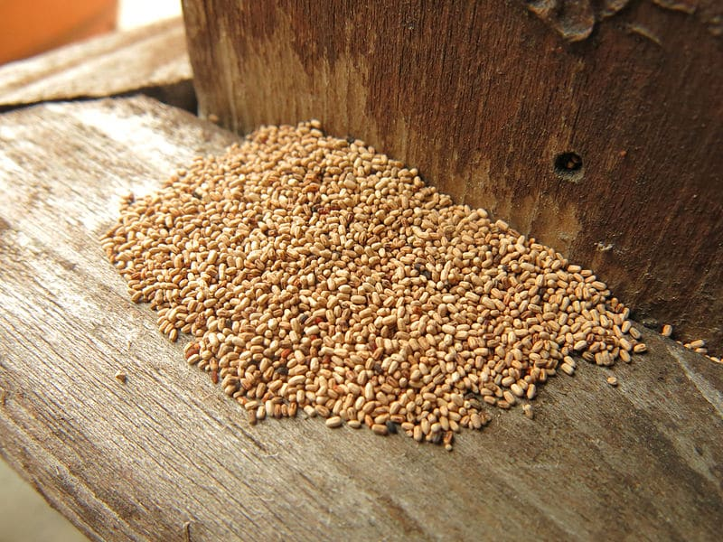 termite poop or pellets