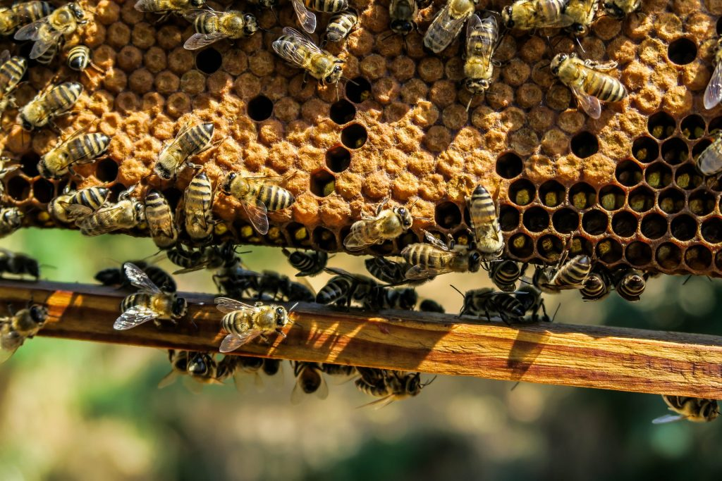 reading beekeeping books can make you a better apiculturist
