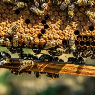 8 Best Beekeeping Books for Beginners to Experienced Keepers