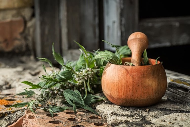 motherwort benefits can be taken in many forms