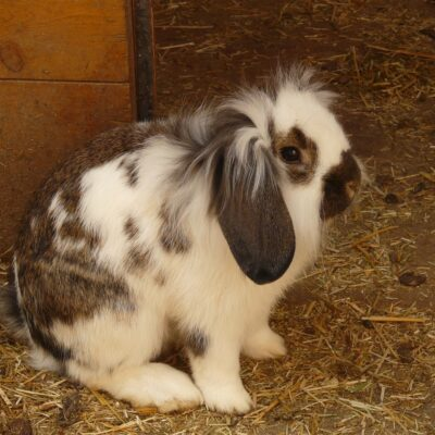 Did You Know That Rabbits Eat Poop?