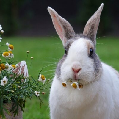 Fundamentals of What to Feed Rabbits