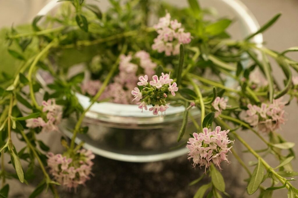 benefits of thyme herb