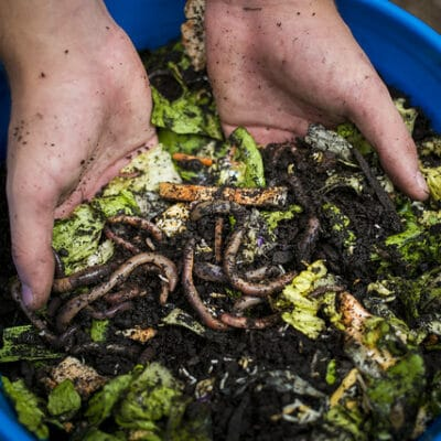 Free Things to Feed Composting Worms (and What to Avoid)