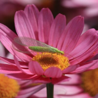 13 Beneficial Insects that Will Annihilate Pests