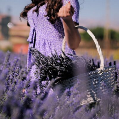 Which Type of Lavender Should you Grow? There are over 450 Varieties!
