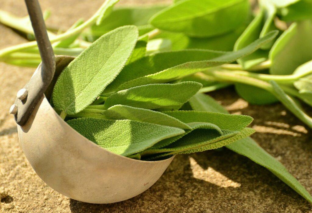 medicinal benefits of sage